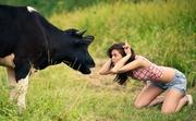 Продам молочную корову от хозяйки